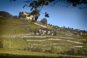 Domaine de la Bolliattaz, Hammel - Terres de Vins